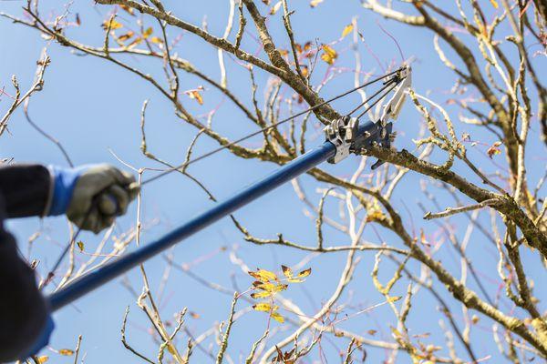 Gardener using telescopic pruning shears for garden maintenance