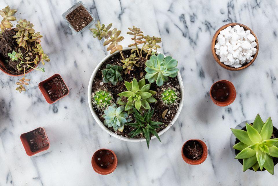 succulent container garden hero
