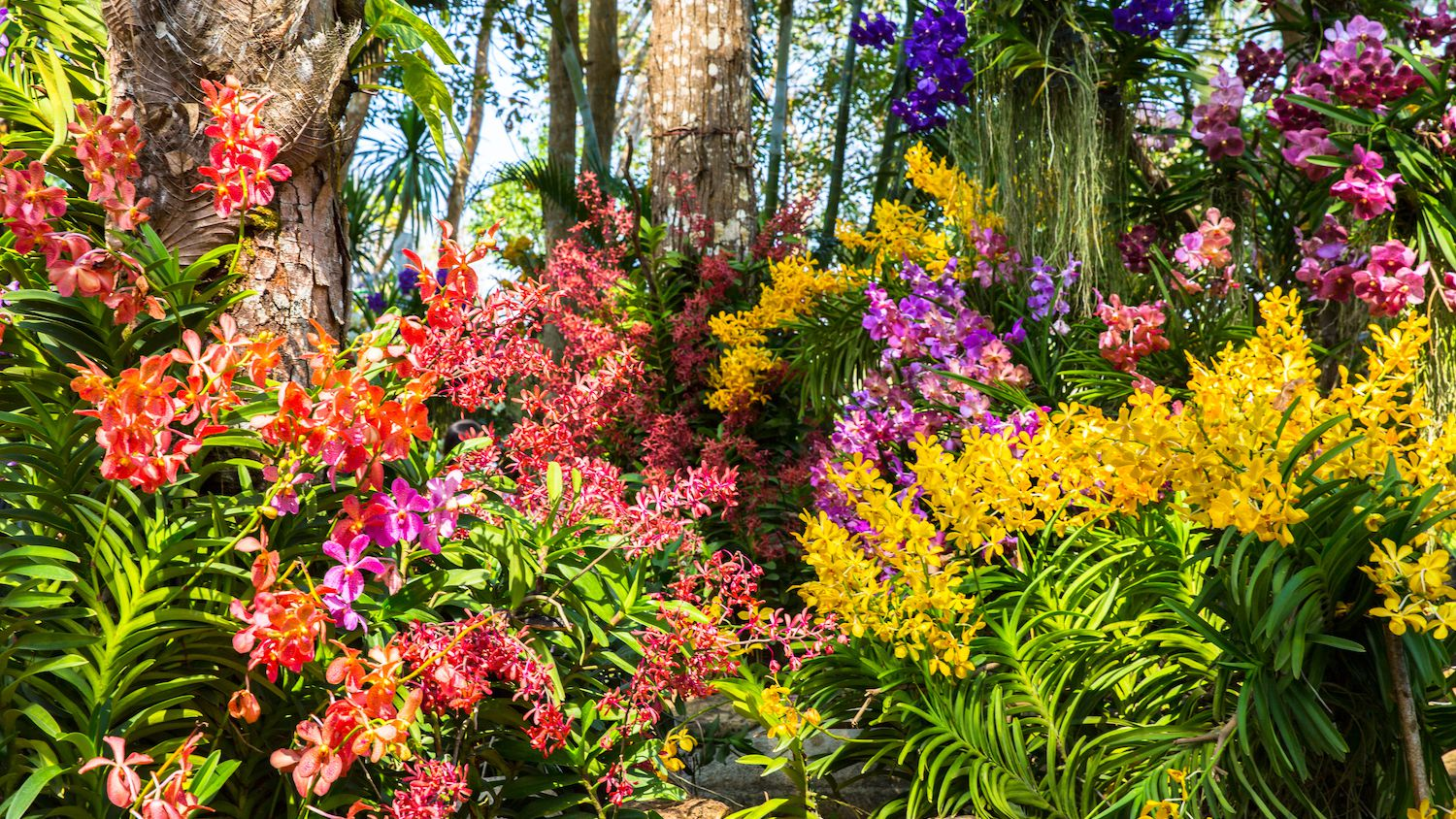 How To Grow An Amazing Flower Garden
