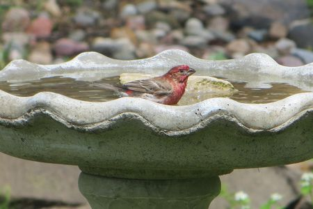 Unique Concrete Bird Bath Repair