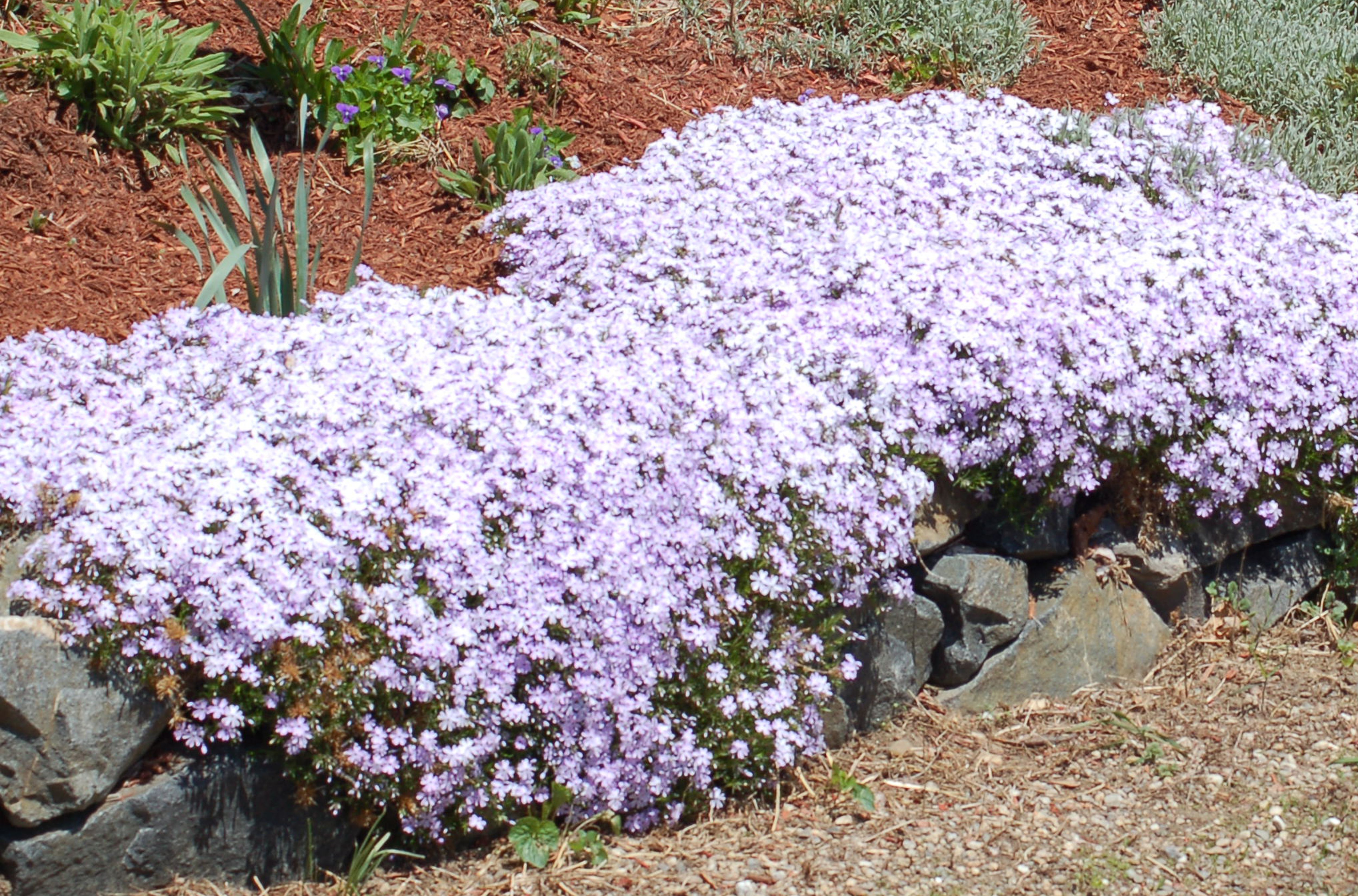 Creeping Plants What They Are Examples Uses