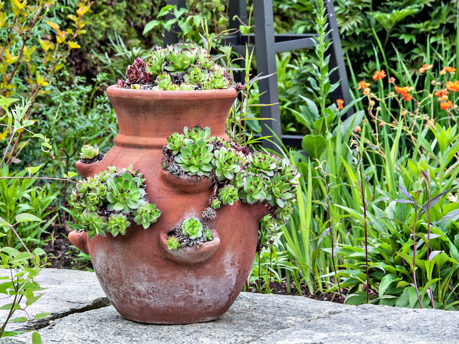 How To Plant A Strawberry Pot
