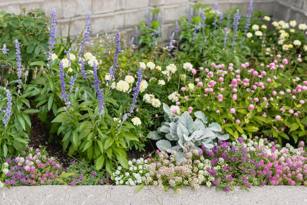 well-laid out flower bed