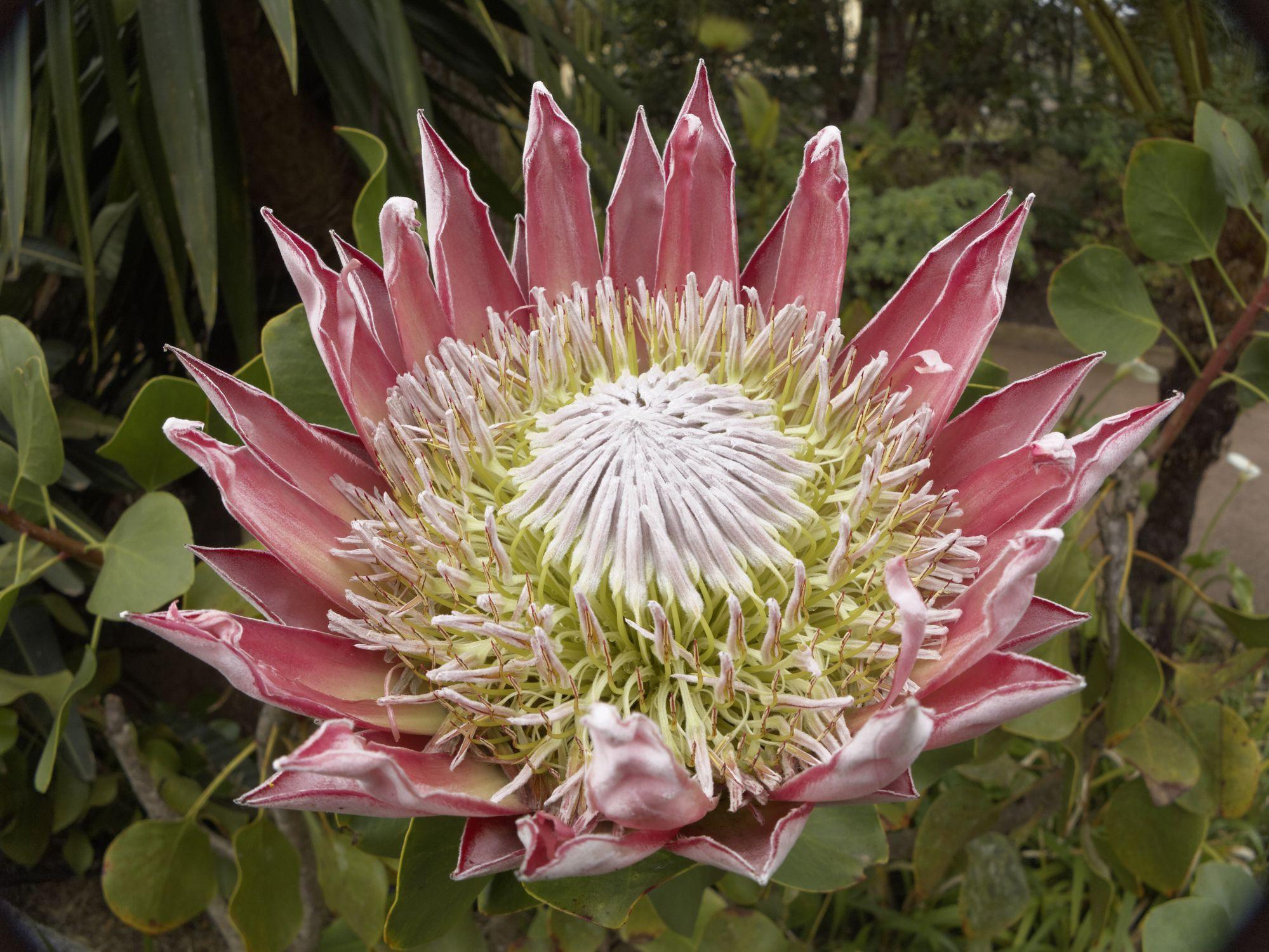 16 plants with big flowers izmirmasajfo