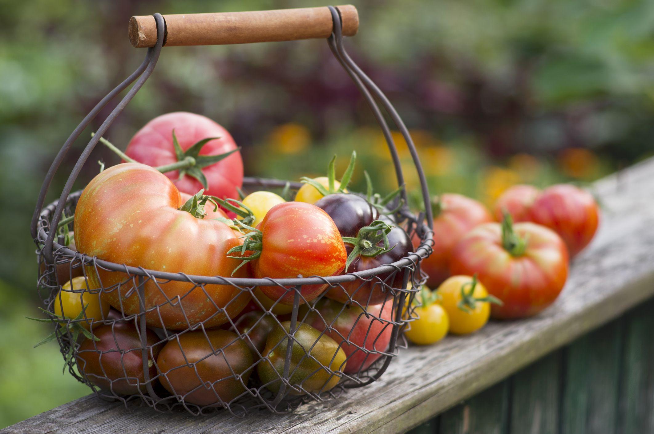 Growing Heirloom Vegetables For Home Gardeners