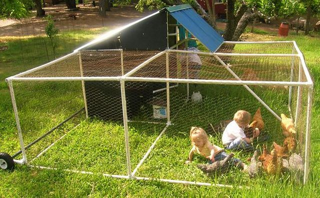 Niños y gallinas en un gallinero