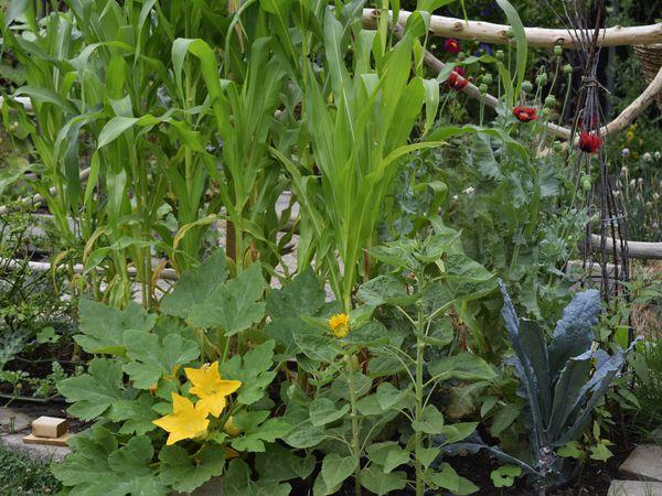 companion planting vegetables