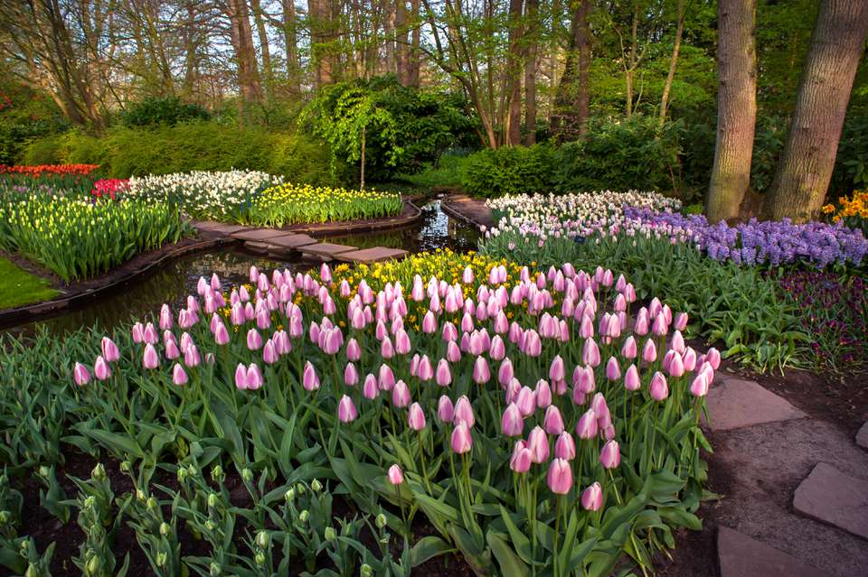 Flower garden with pink tulips and white, purple and yellow flowers