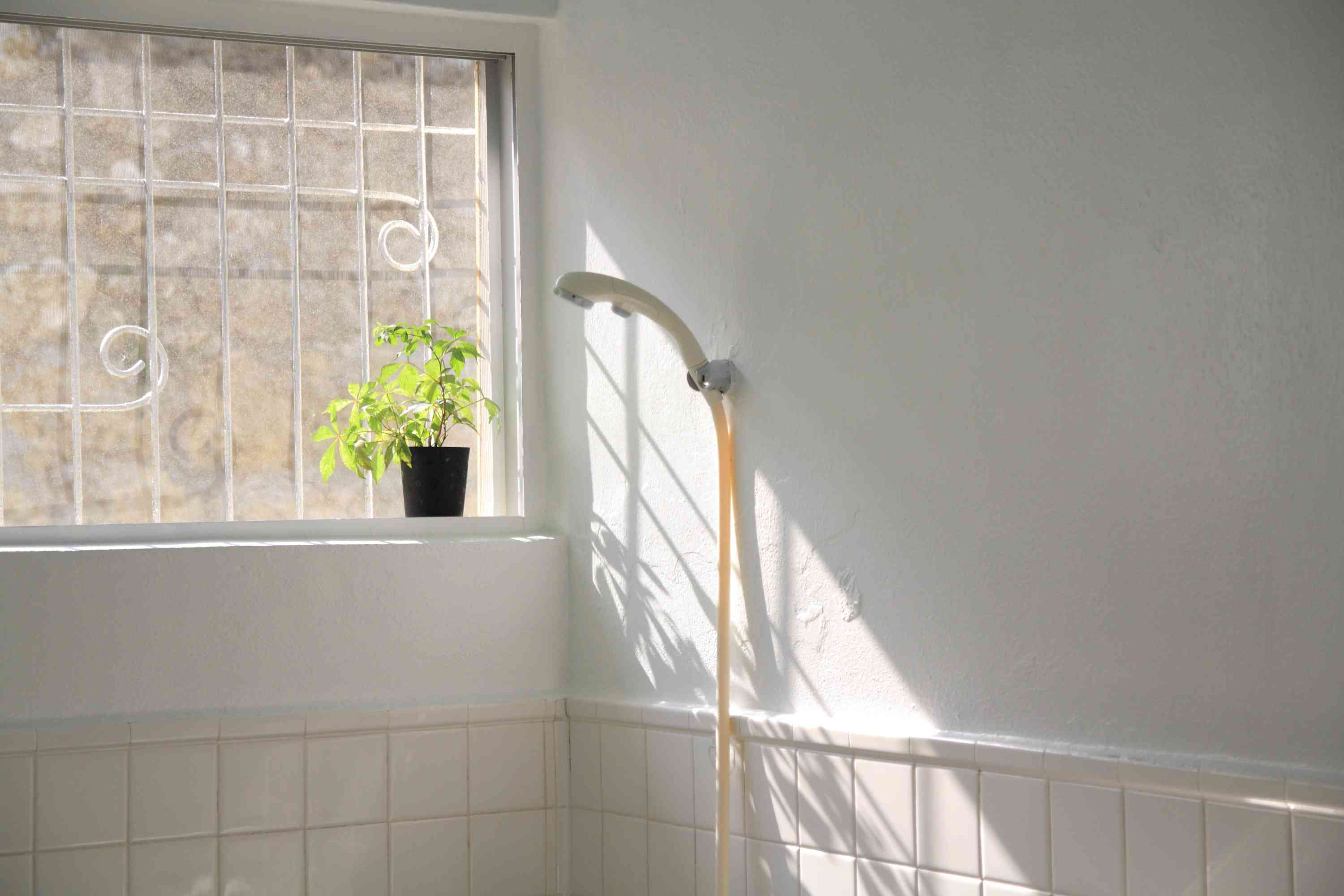 Shower and potted plant in bathroom