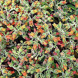imagen de macetas de plantas aéreas o tillandsia en recipientes de vidrio