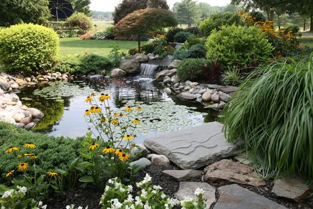 pond and plants in a backyard - Water Garden Plants
