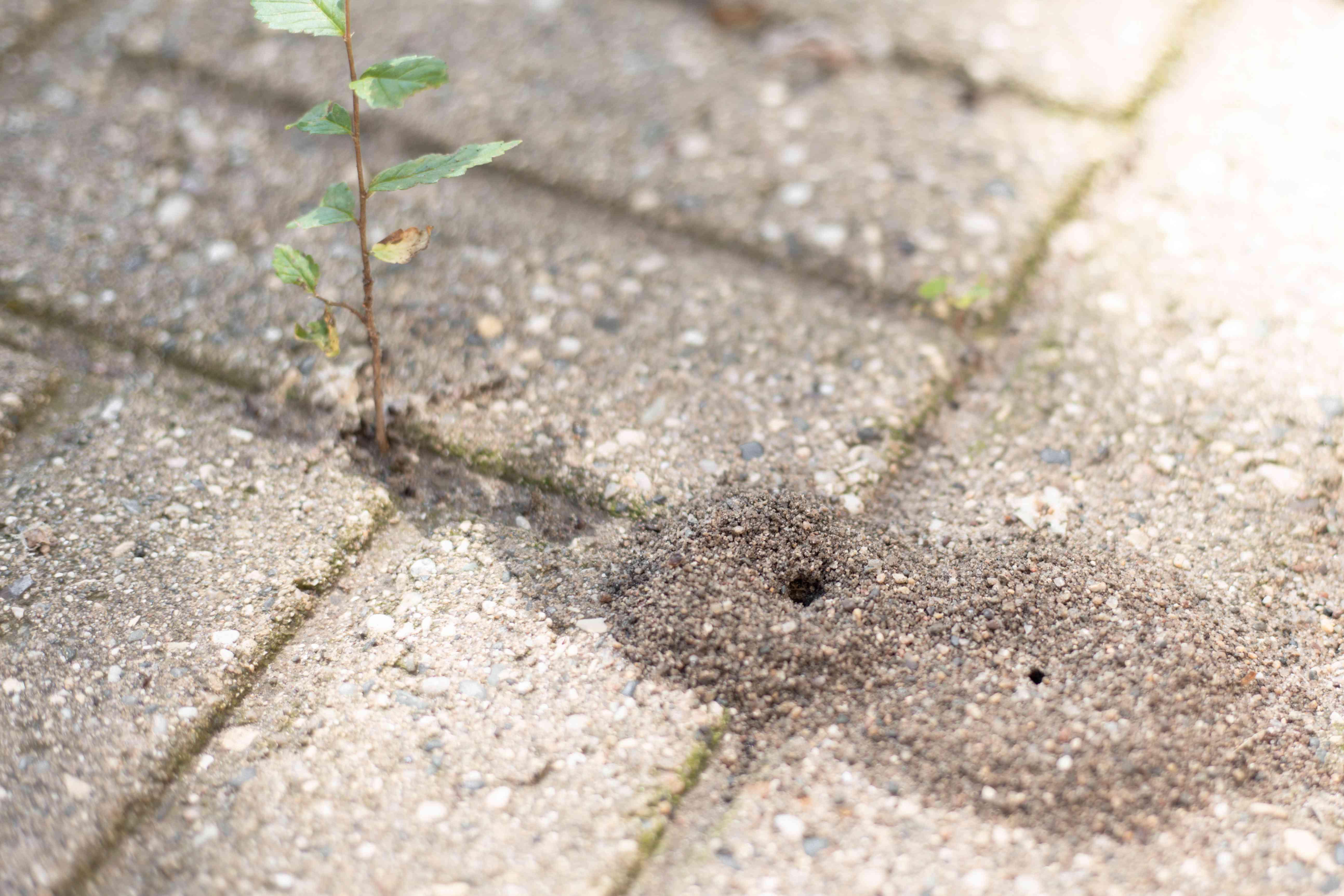 Ant nest hole in between cement block cracks