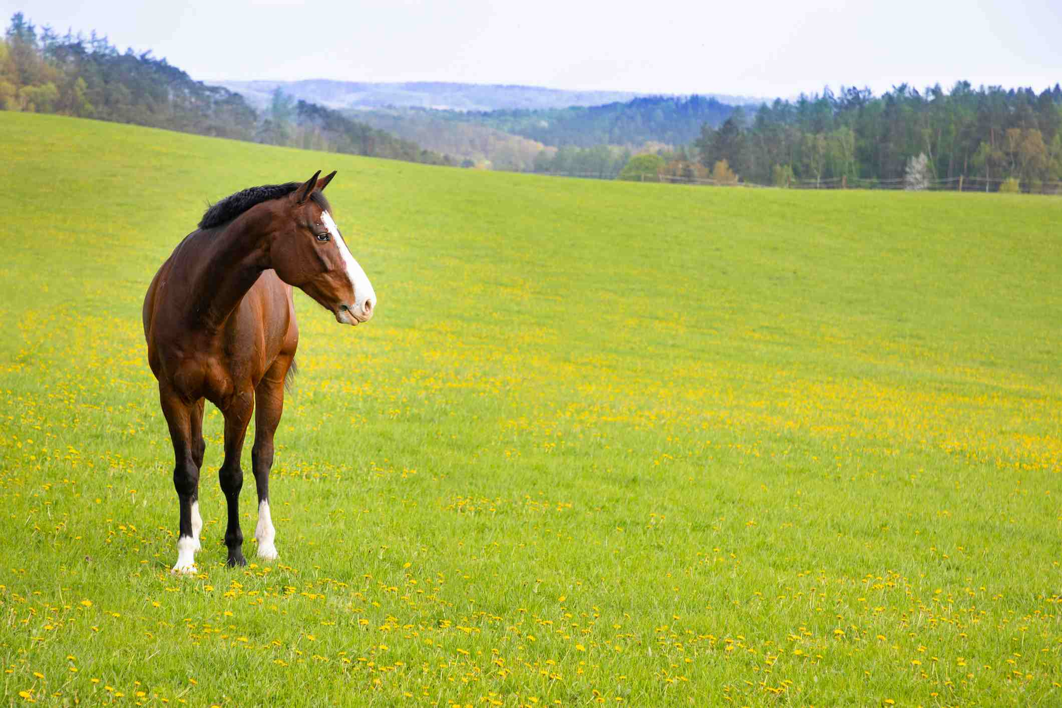 Horse roaming in a grassy field