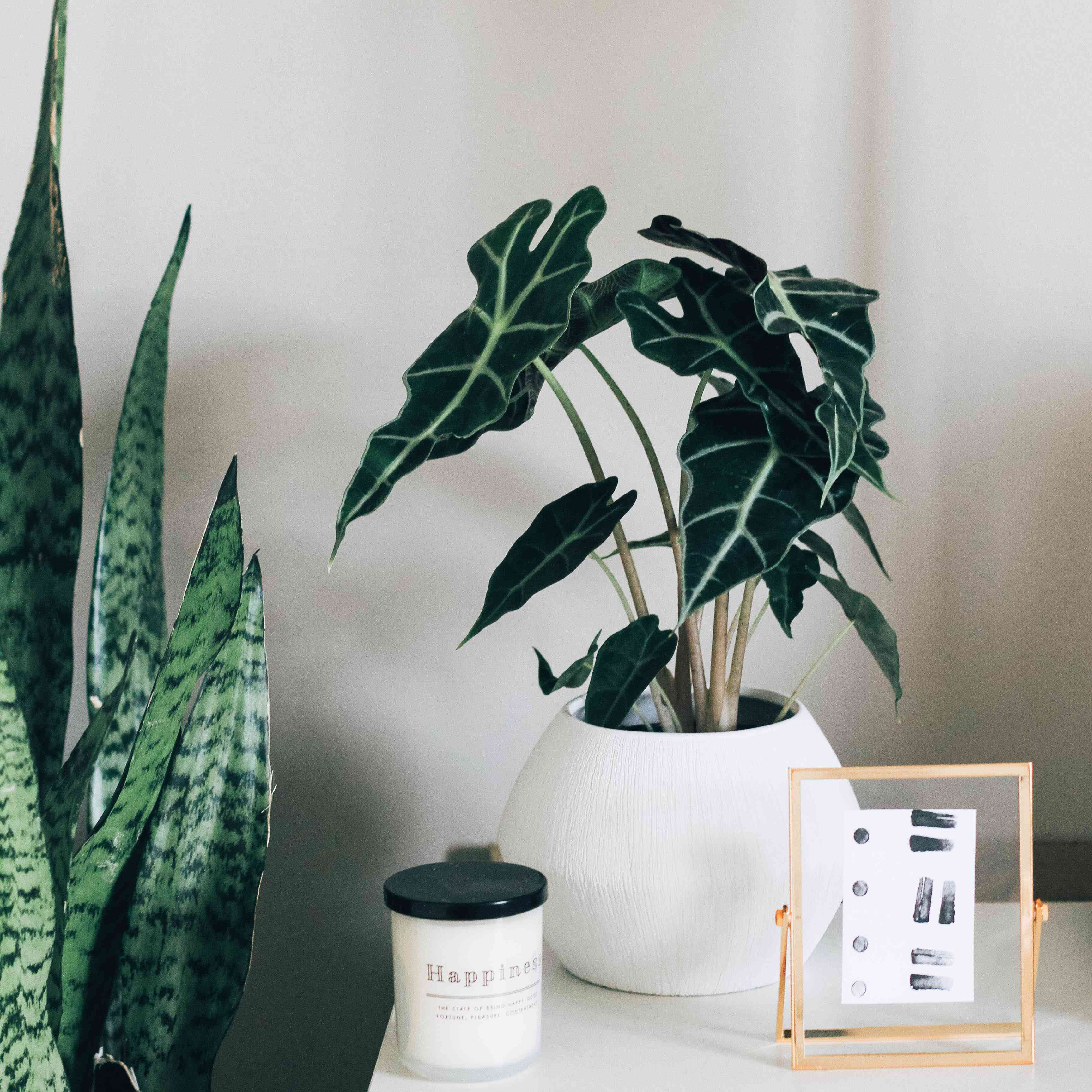 white and wood furniture with two plants and accessories