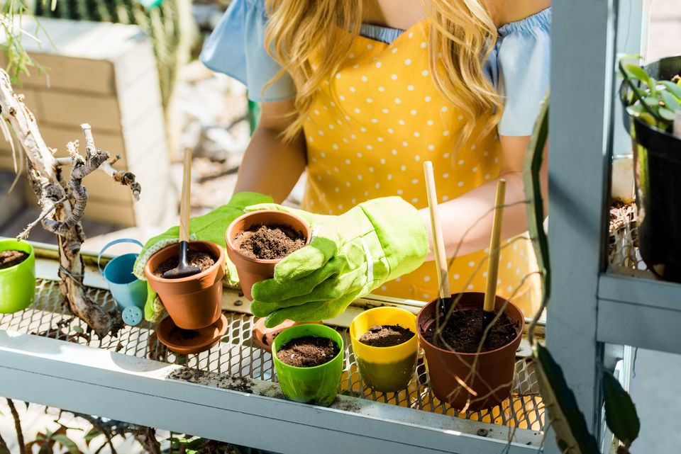 cropped shot of young woman holding flower pots in greenhouse