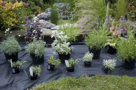 Plants In Pots Laid Out On Horticultural Membrane To Plan Garden Border Design