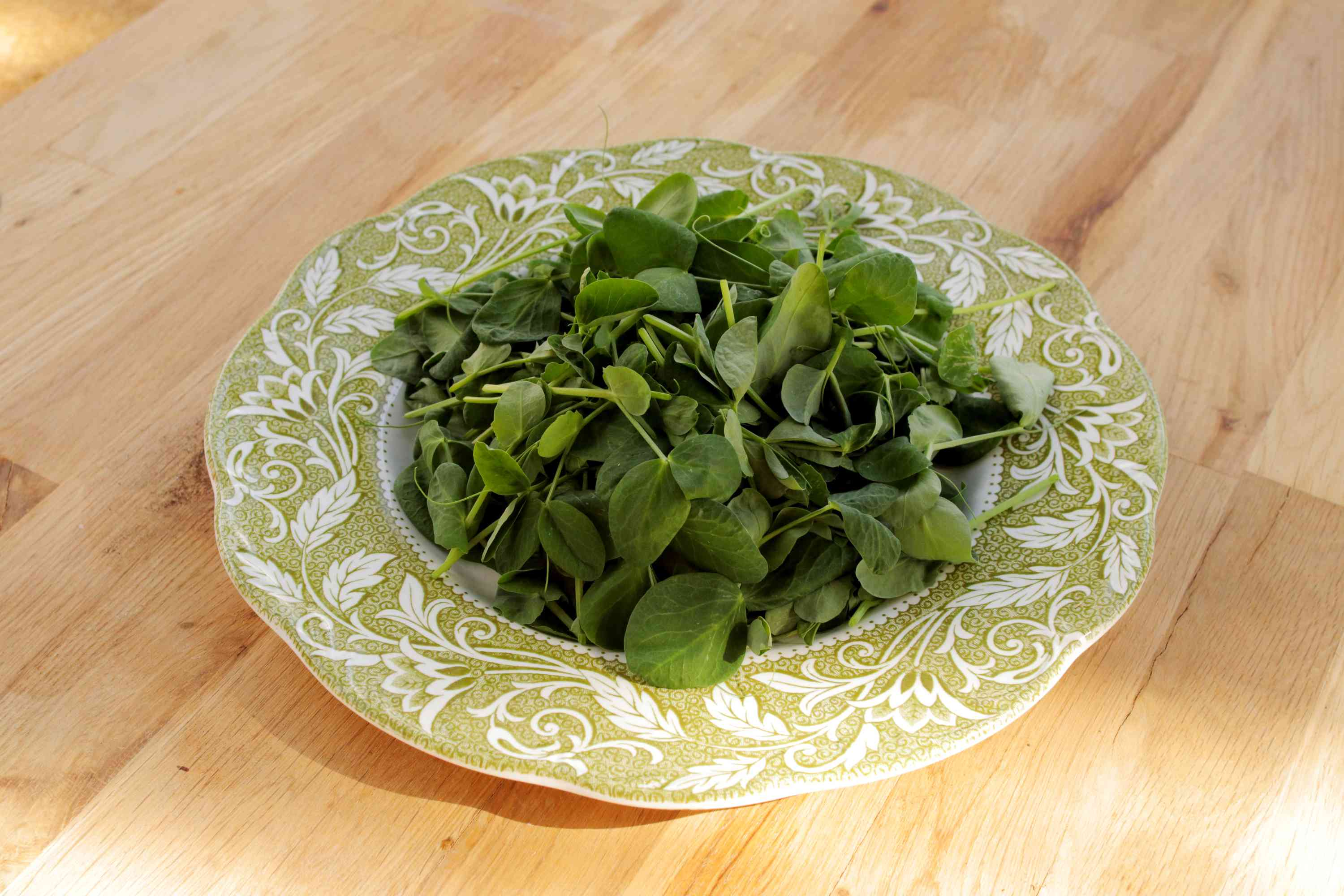 Pea shoots and tendrils inside white and green ceramic bowl on wooden surface closeup