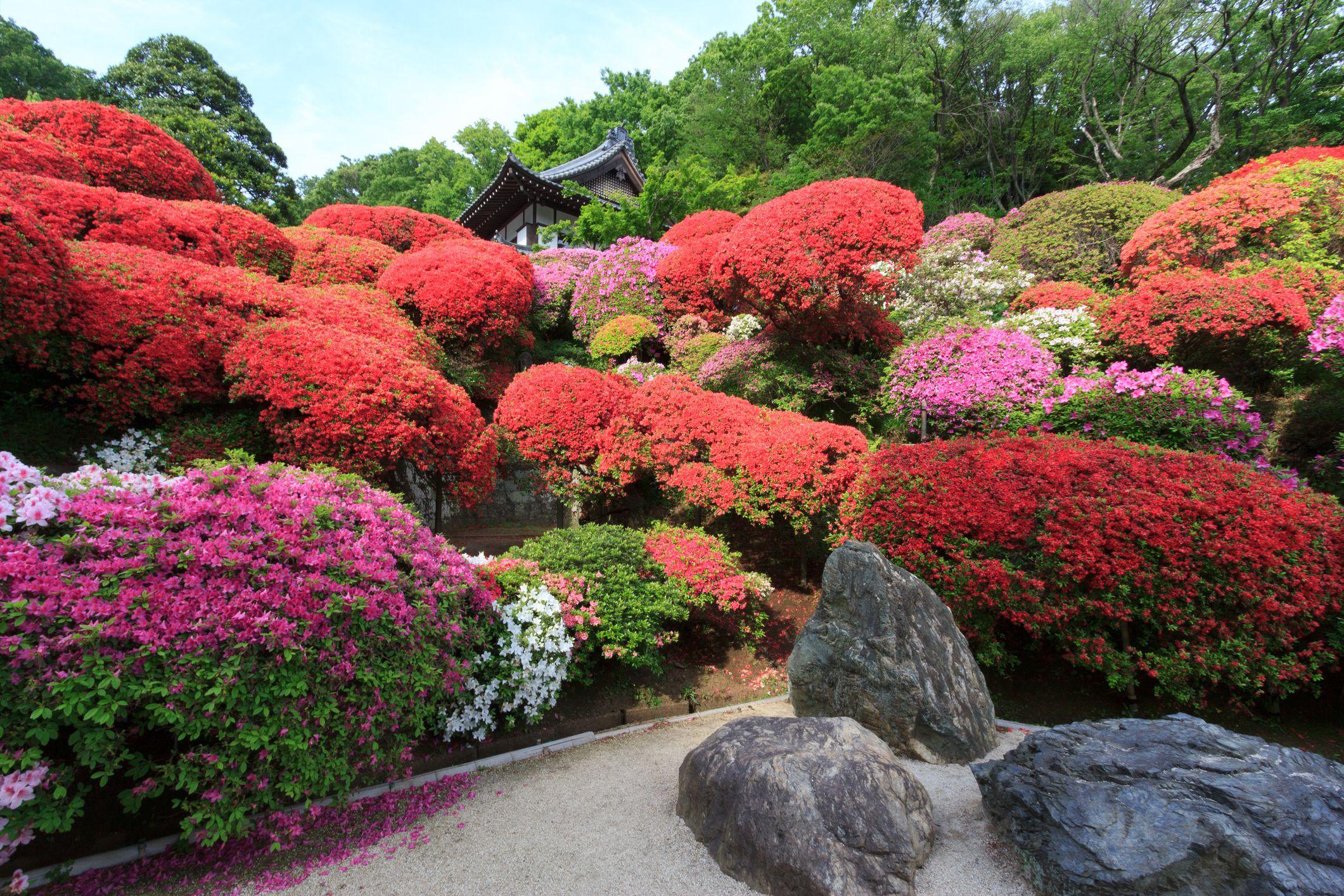 Anese Azalea Garden