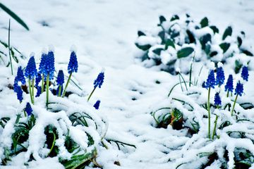 Gardening Tips for February