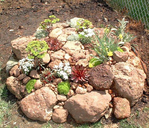 Example of rock garden plant selection.