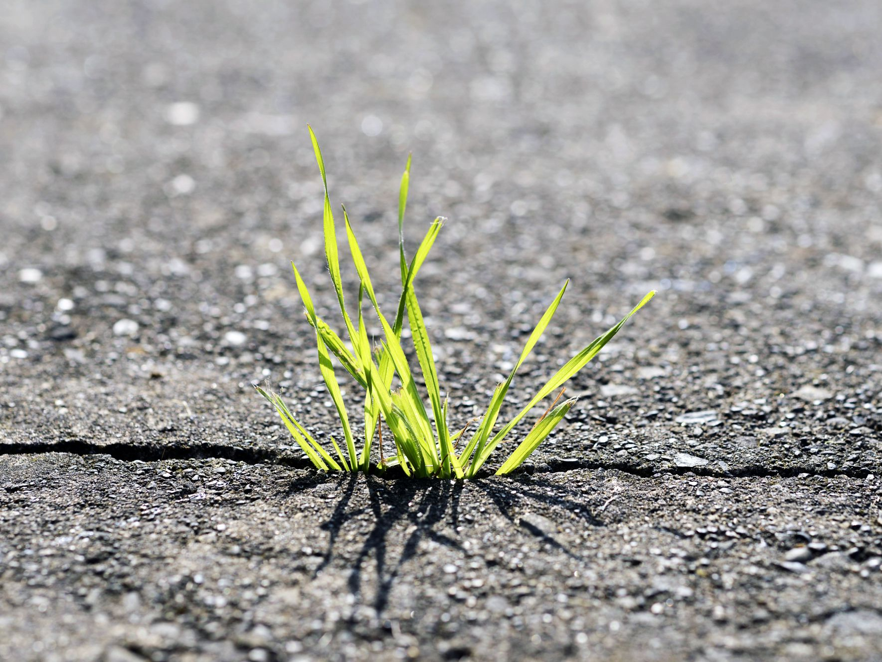 Image result for grass growing up between sidewalk""