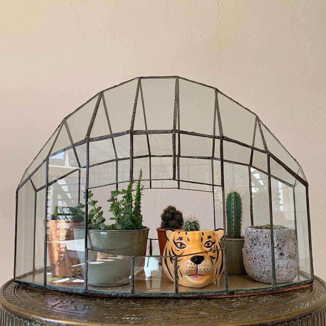 Plantas múltiples bajo una cúpula de vidrio