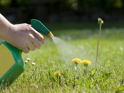 How to Kills Weeds With Environmentally Friendly Methods