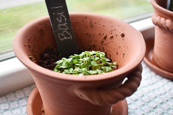 Window Garden Rustic Charm Herb Trio Kit