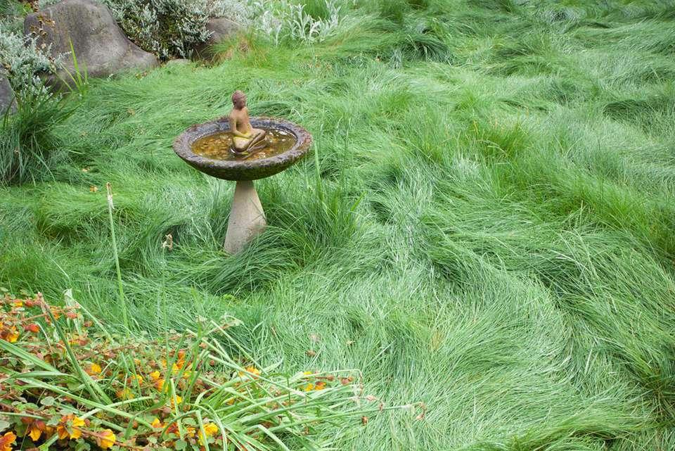 Yellow flannel bush (Fremontodendron 'Ken Taylor'). Mixed fescue meadow.