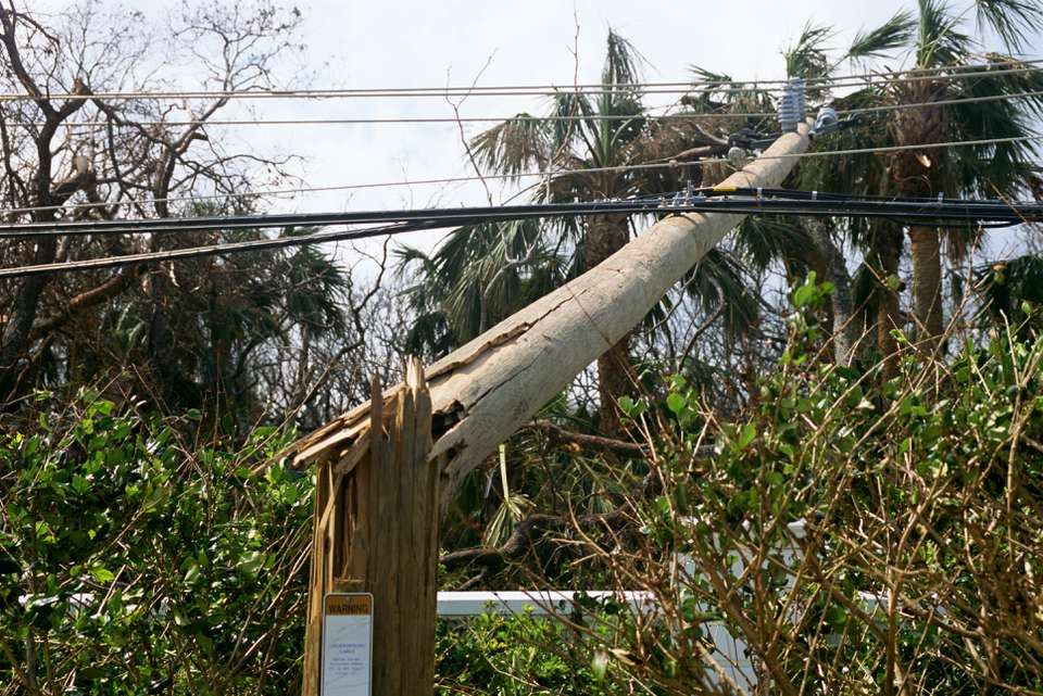Downed tree on a power line
