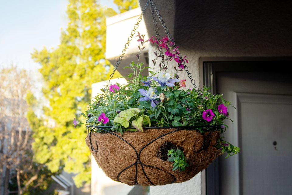 Flower basket hanging outdoors with various small flowers