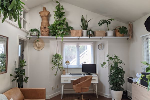 Denise Bayron's tiny home includes many plants, but some she regrets purchasing