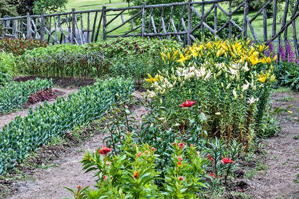 Plant a Cutting Garden