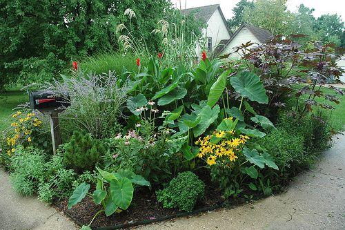 Tropical Mailbox Garden