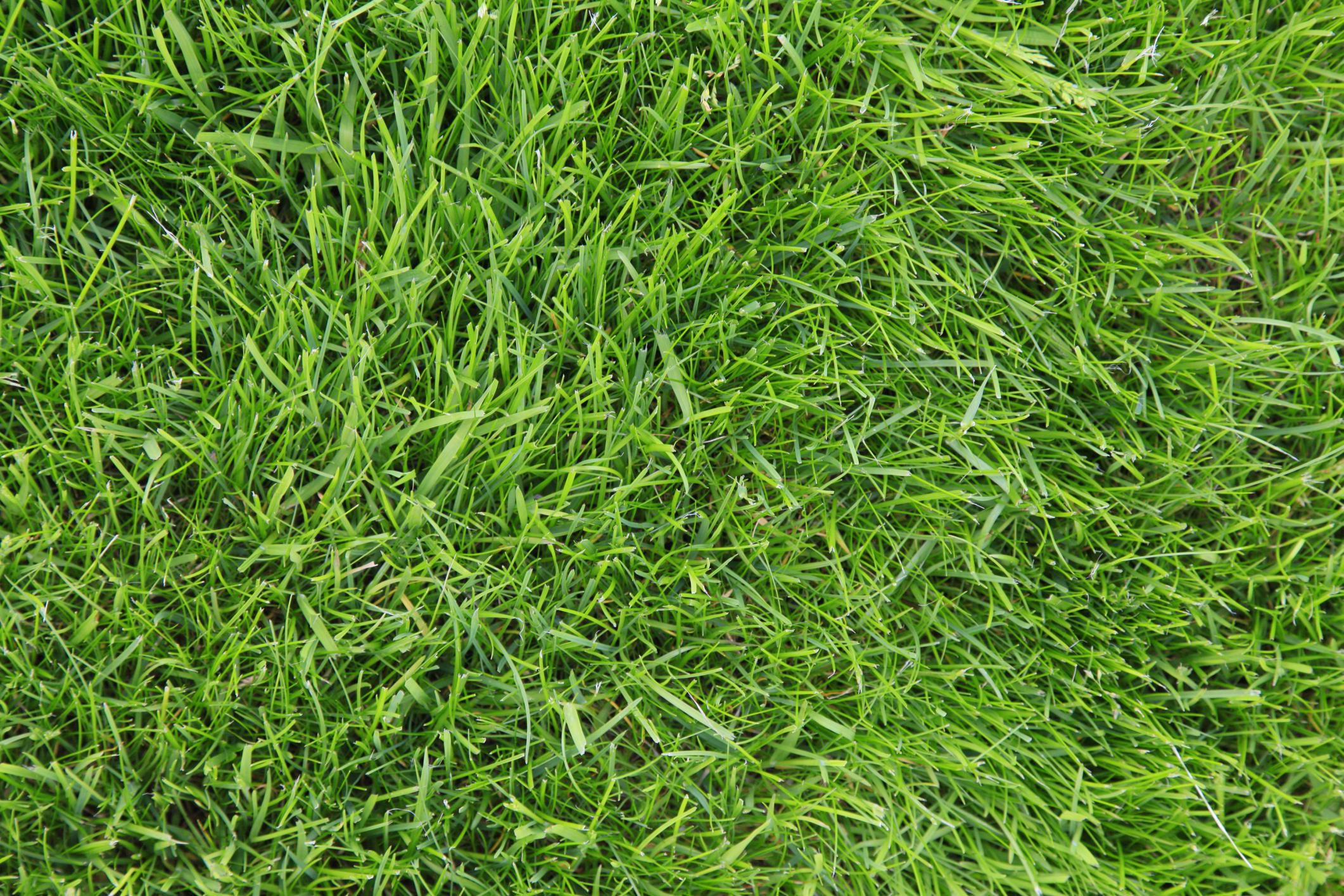 10 Best Types Of Drought Tolerant Lawn Grass