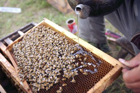 How, When and Why to Feed Your Honeybees
