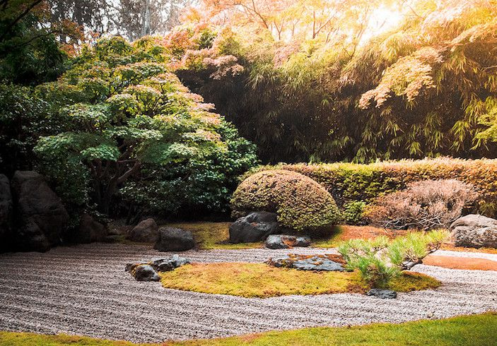 Autumnal Japanese garden with raked gravel paths and rocks and shrubs