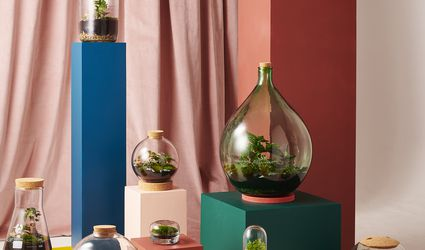 A mix of terrariums on colorful blocks from London Terrariums