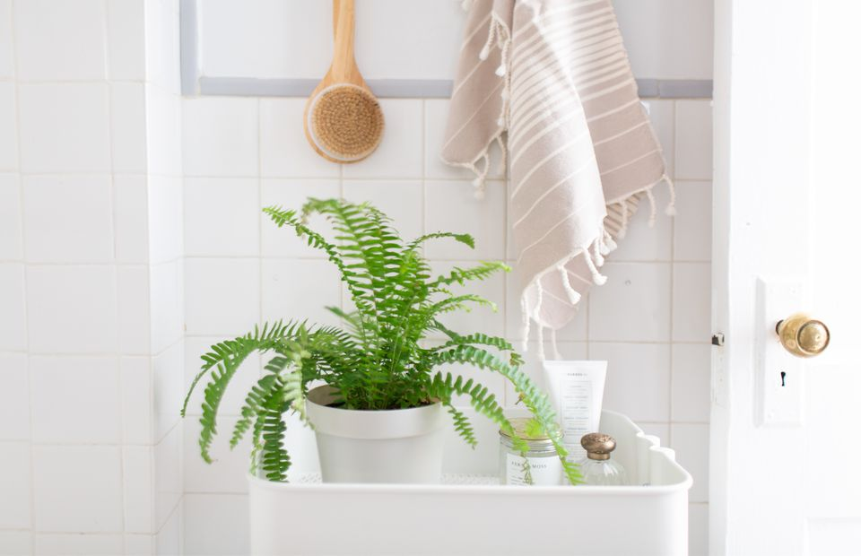 A Boston fern on a bathroom cart