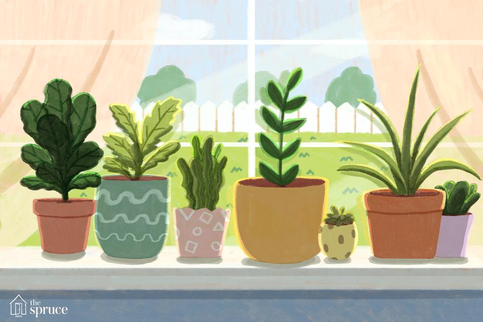 houseplants on a window sill illustration