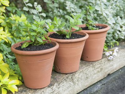 b52465605fd2 Potrisers are Pot Feet that Can Save Your Plant s Life · Container Gardening