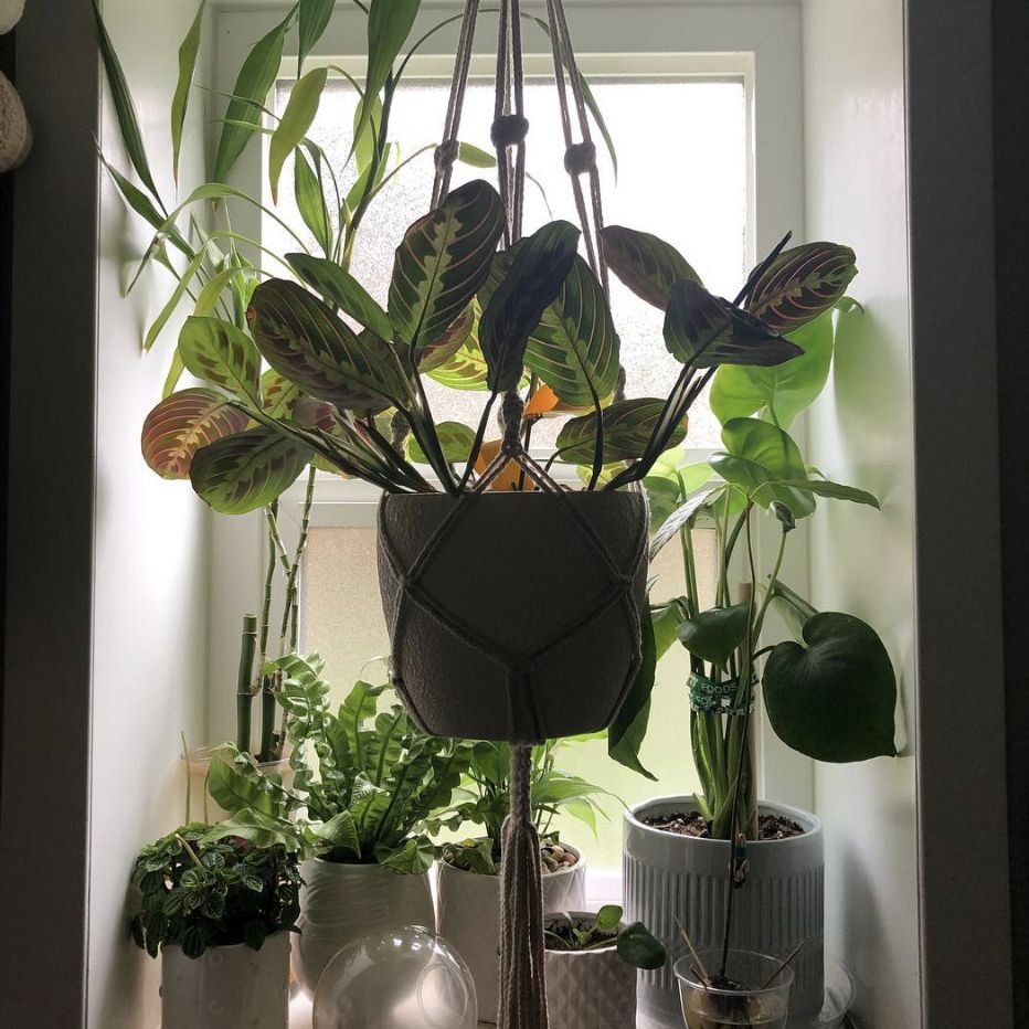 Plants hanging in a window