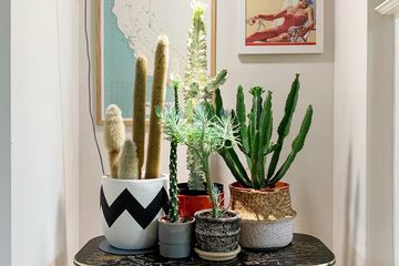 sarah's succulents
