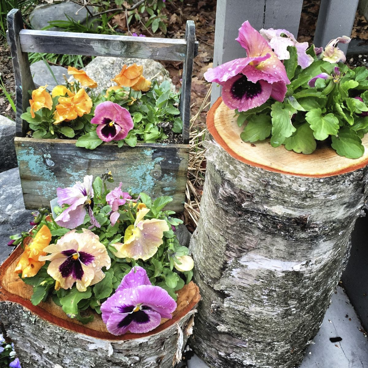 Introduction To Unusual Container Gardens