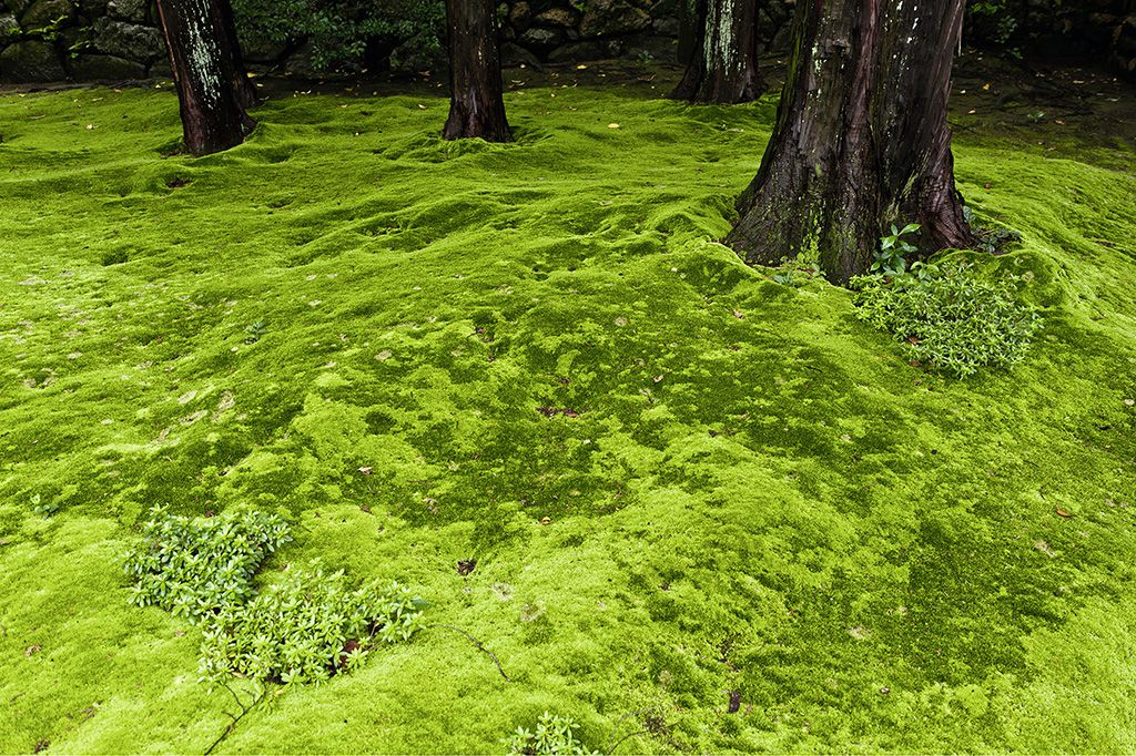 Create A Moss Lawn For Year Round Green