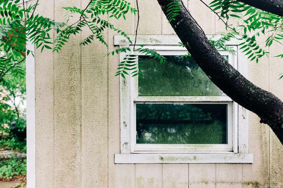 Outdoor wooden wall with green mold behind tree trunk