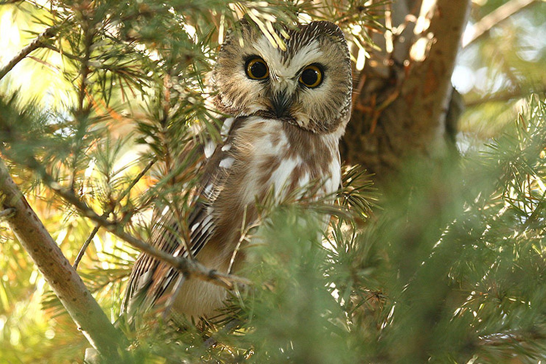 The Basics of Owling