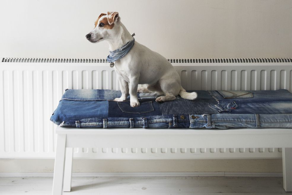 Dog sitting on a repurposed bench seat