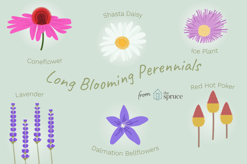 Perennial flowers that bloom all summer list of perennial flowers that bloom all summer long mightylinksfo