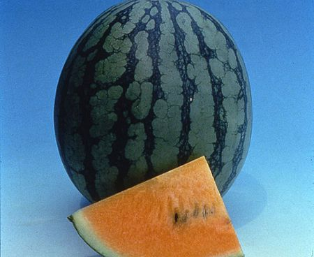 Learn How to Grow Watermelons